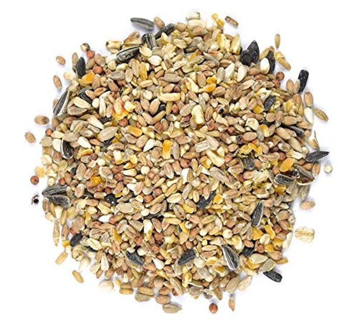 Hurry! 1kg Bird Food for 49p!
