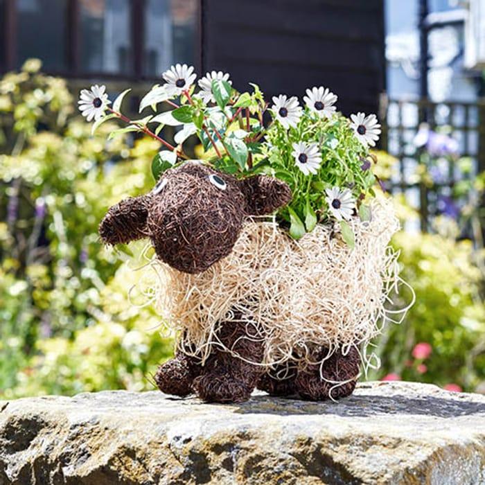 Shelley Sheep Planter - £9.99 @You Garden