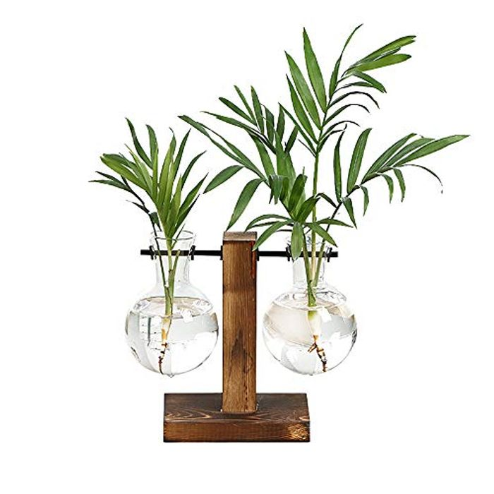 Magiin Plant Terrarium with Wooden Stand
