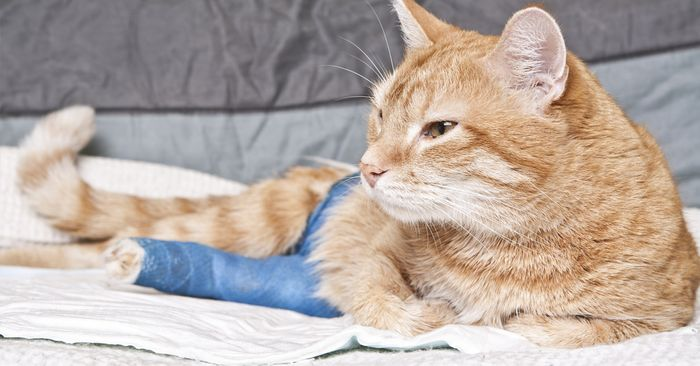 Get Your Free Pet First Aid Guide