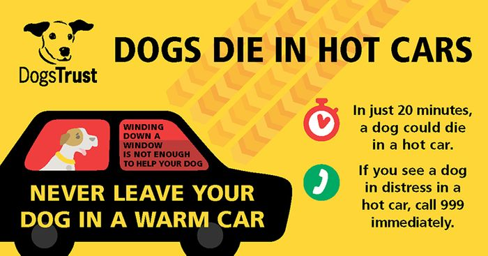 Dogs Die in Hot Cars Window Sticker FREE