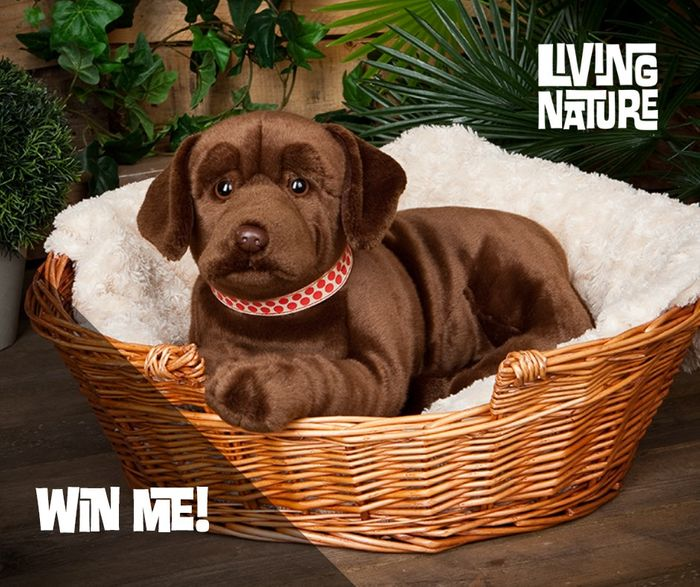 Win a Gorgeous Chocolate Labrador Soft Toy!