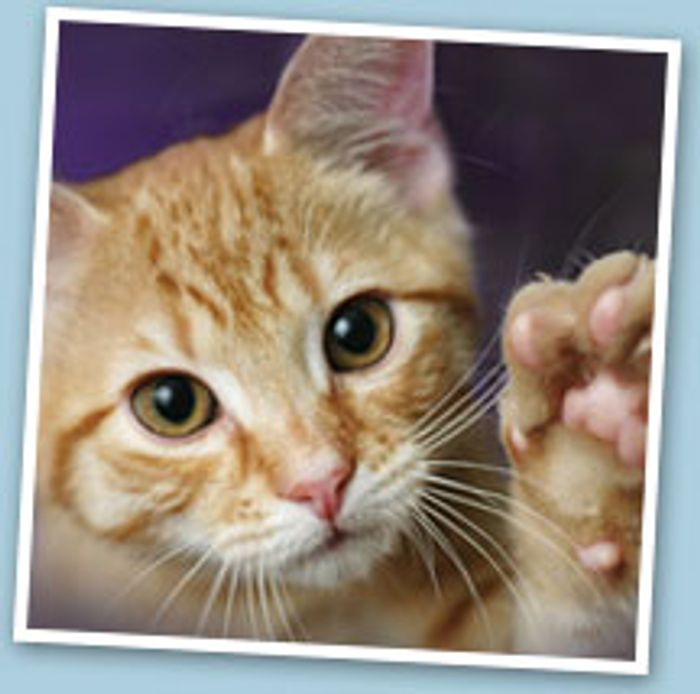 4 Weeks' Free Insurance Trial (Cats, Dogs, Rabbits)