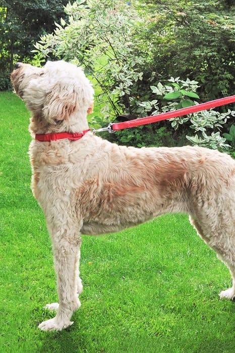 Star Wars Lightsaber Dog Lead, Only £7.00!