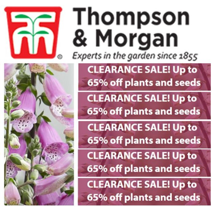 CLEARANCE - ENDS MIDNIGHT! - Up to 65% off plants and seeds