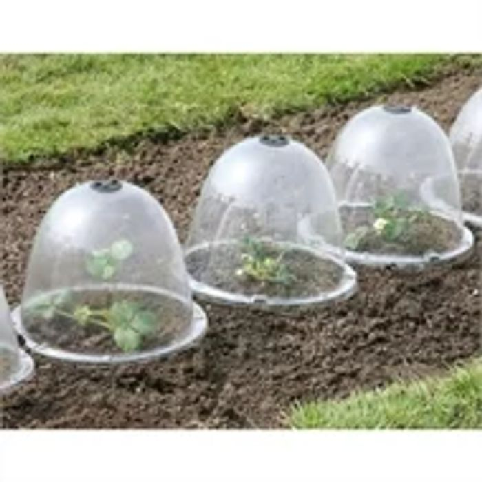 Large Bell Garden Cloche - Pack of 3