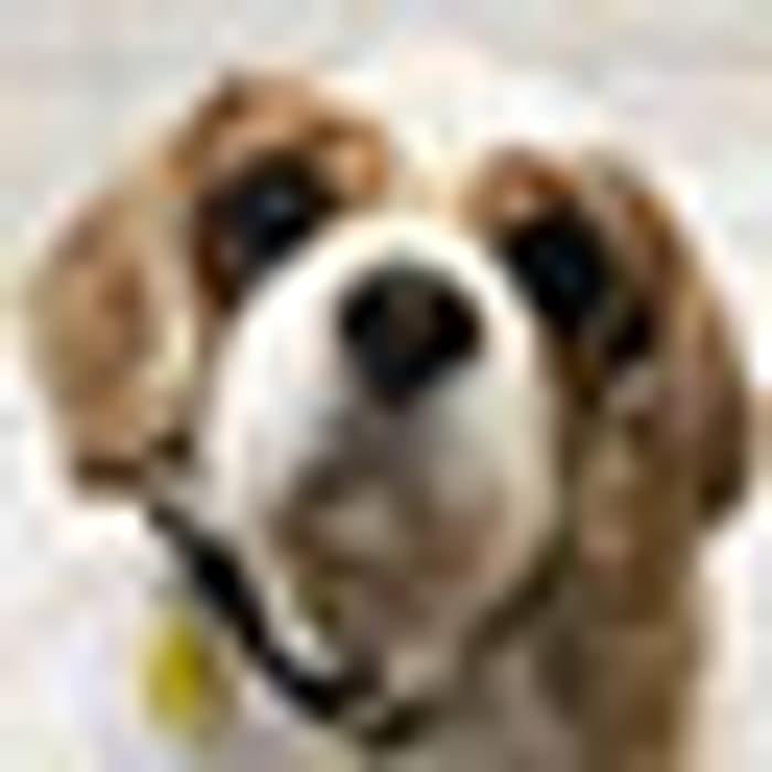 Free Canine Care Card