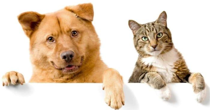 Choose 4 Pet Food Samples Free