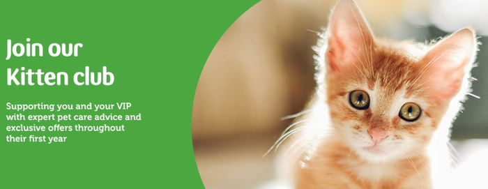 Free Kitten Food and More When You Join VIP Kittens Club
