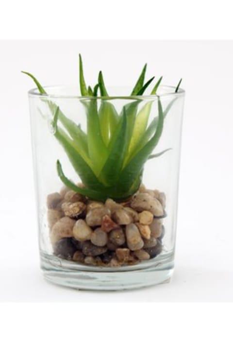 Mini Succulent In Glass Jar - Only £2!