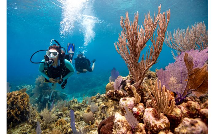 WIN ONE of 5 PADI eLearning COURSES