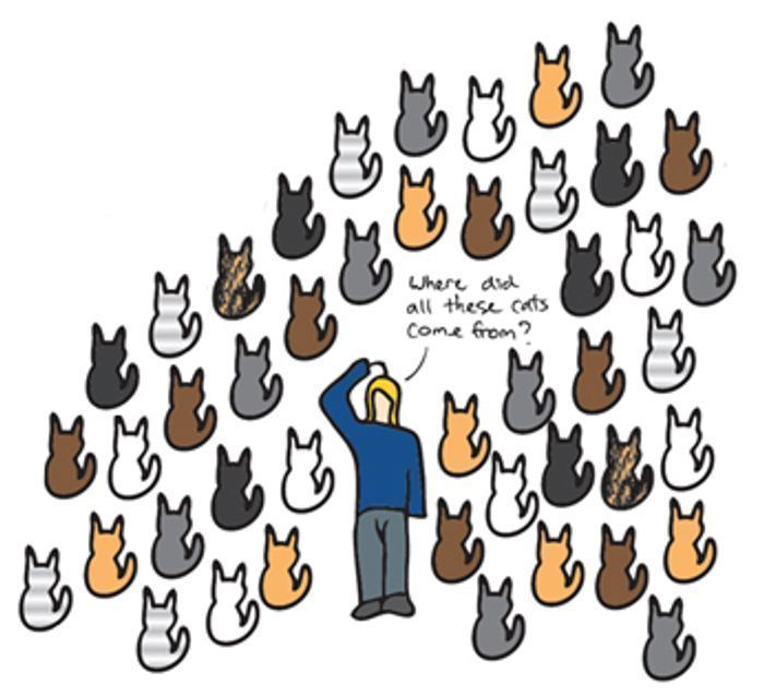 Free Cat Neutering in London (Within M25) if Eligible