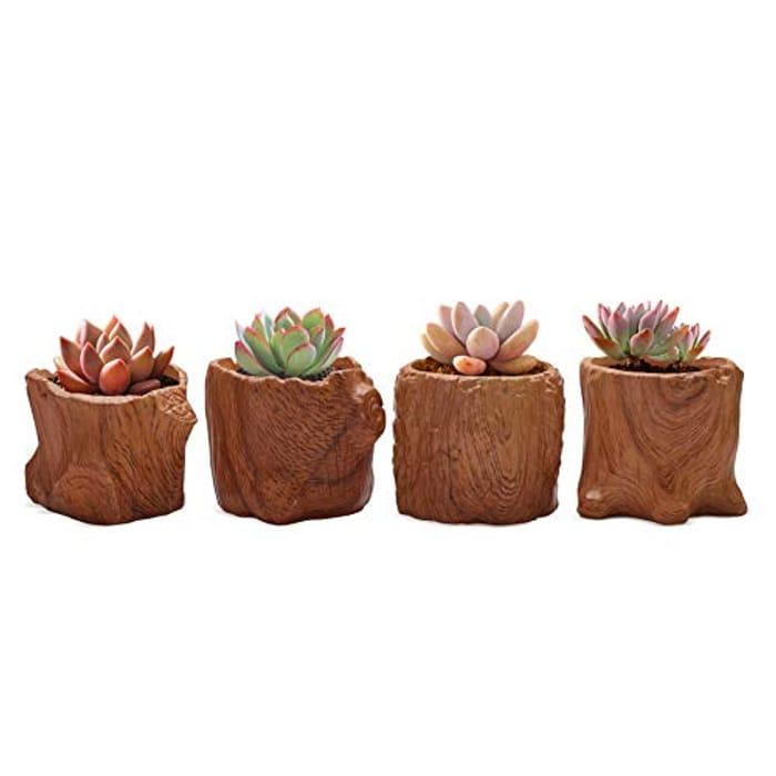 Price Drop! 8.5CM Ceramic Succulent Pots Set of 4