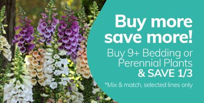 Get 33% Off When You Buy 9+ Of Our Perennials & Bedding Plants