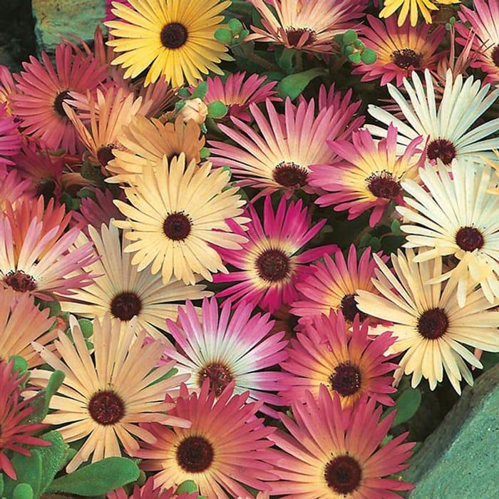 Buy 6+ Seed Packs & Get A Free Seed Bundle Worth Over £5