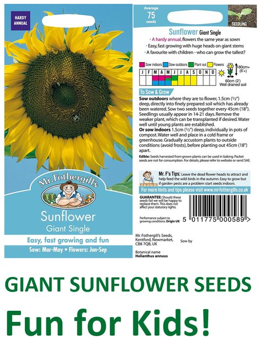 75 GIANT SUNFLOWER SEEDS - £2.38 Delivered - Who Can Grow the Tallest?