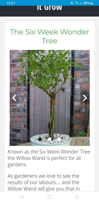 Order a FREE Willow Wand Plant Today! . Jst Pay Postage
