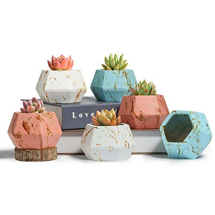 Pack of 6 Stylish Hexagonal Plant Pots with Promo Tab