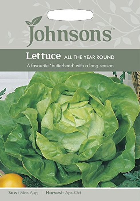 All Year round Lettuce Seeds