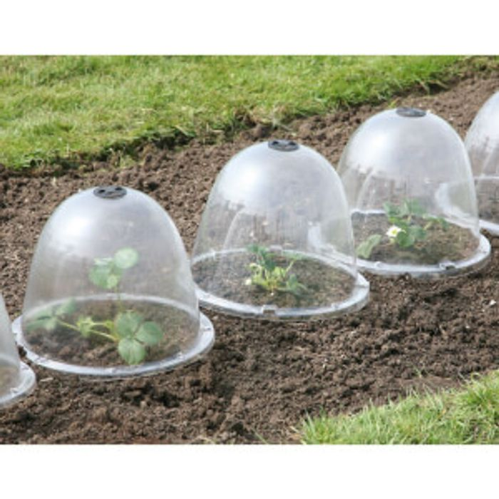 Large Bell Garden Cloche - Pack of 3