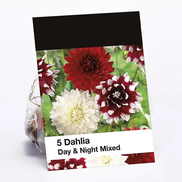 Day & Night Mixed Dahlia Flower Bulb