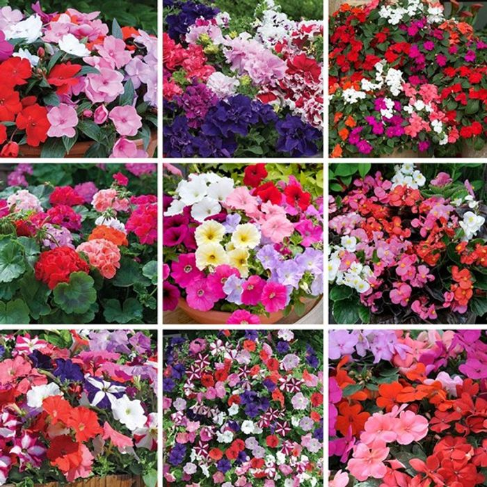 Bargain! 72 Garden Plug Plants, Now Only £4.99 + Free Delivery with Code