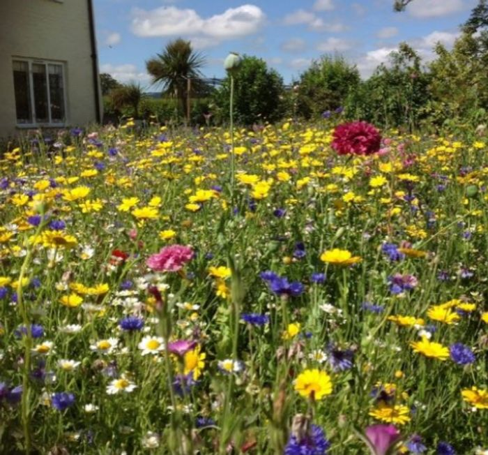 Free Wildflower Seed Catalogue
