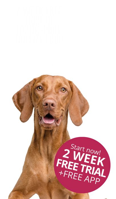 2 Week Free Trial of Tailor-Made Dry Dog Food Kasper & Kitty