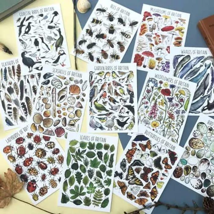 Free Wildlife Postcard Pack