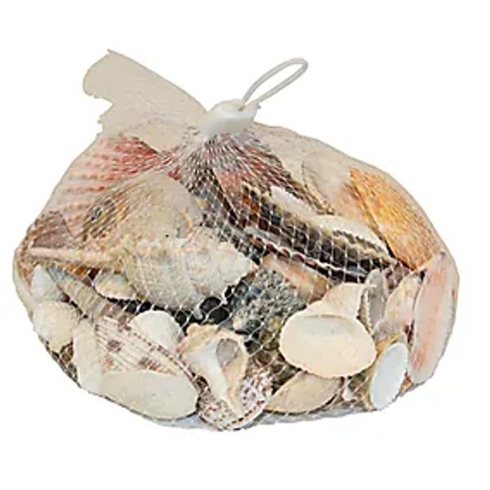 Coastal Decorative Shells