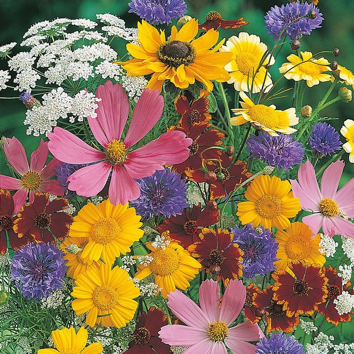 Flower Seeds for Wildlife, Half Price, Wilko