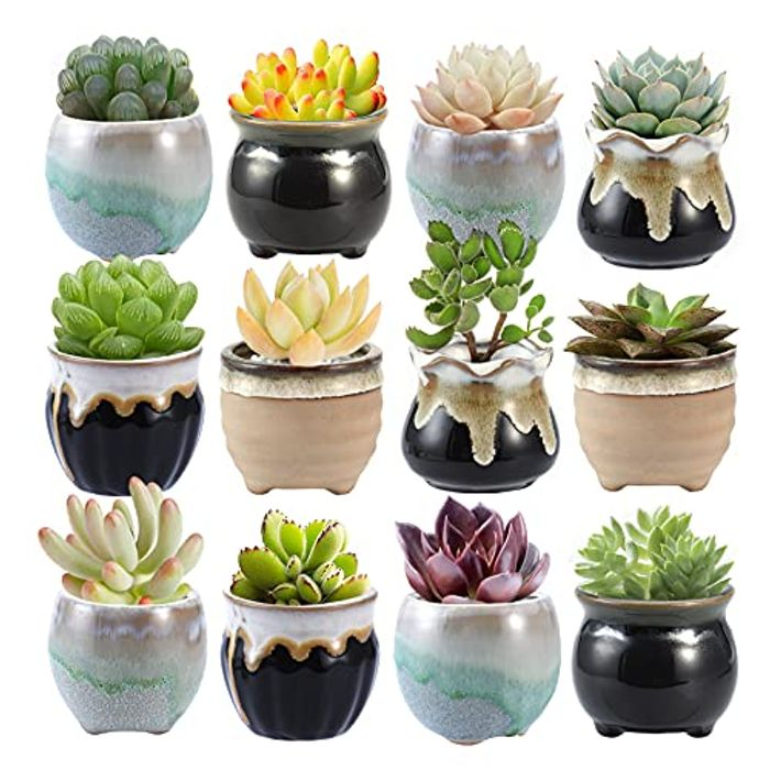 6.5CM Ceramic Succulent Plant Pot, Rustic Style, Set of 12