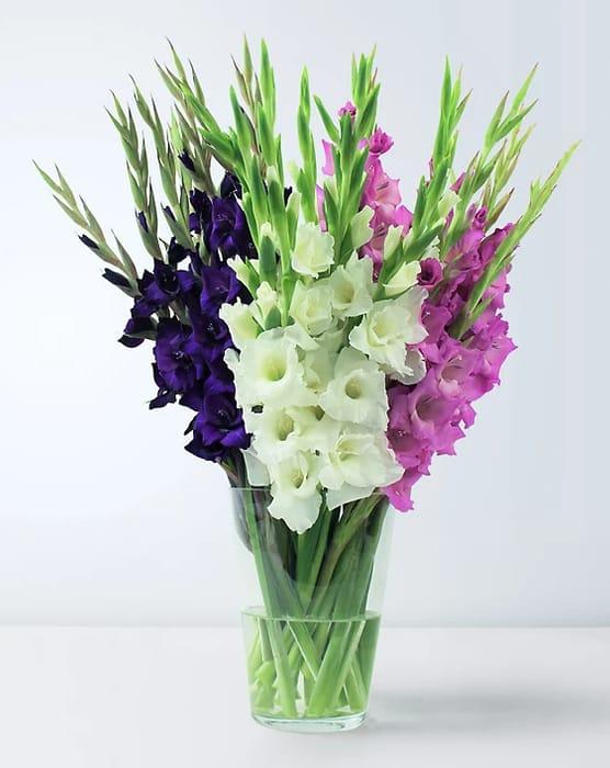 Save £5 - Marks & Spencer British Gladioli Abundance Bouquet - £20 Delivered