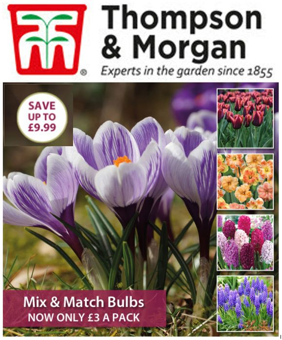 Only £3! Mix & Match Bulb Packs