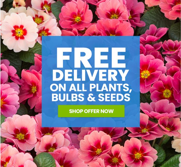 Suttons - Free Delivery on ALL Plants, Bulbs & Seeds - 24 Primroses £4.99