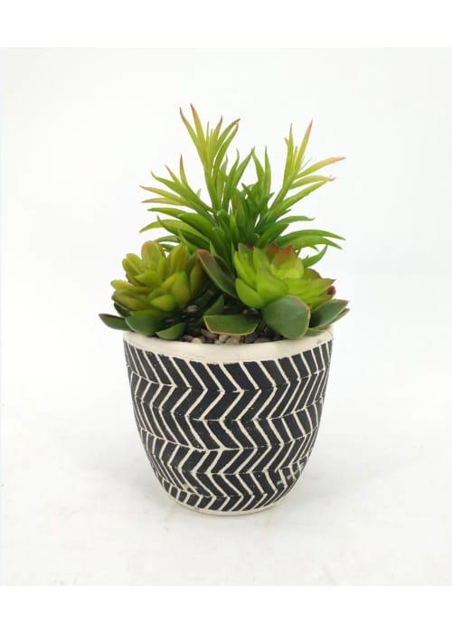 Succulent in Cement Printed Pot (Free C&c))