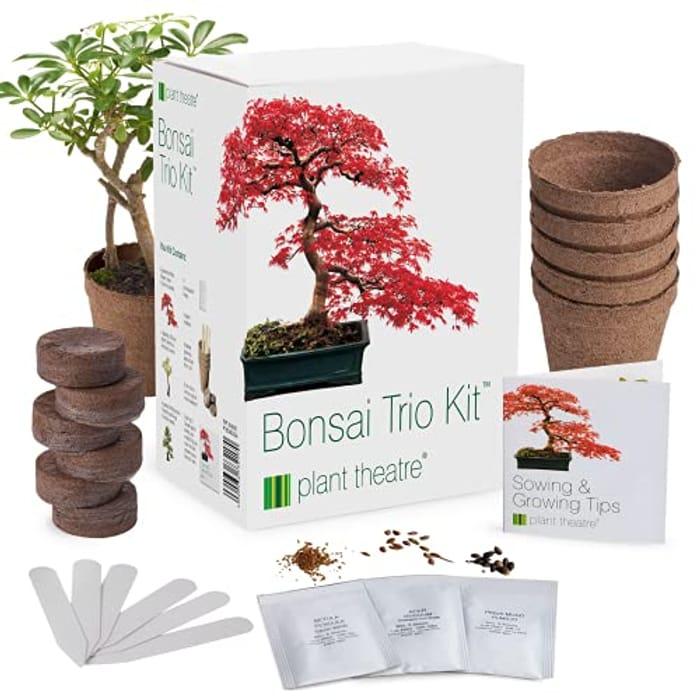 Plant Theatre Bonsai Kit Trio - Grow Your Own Bonsai - 3 Unique Trees
