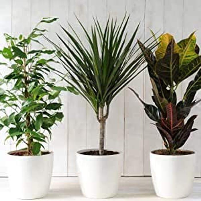 3x Indoor Plants