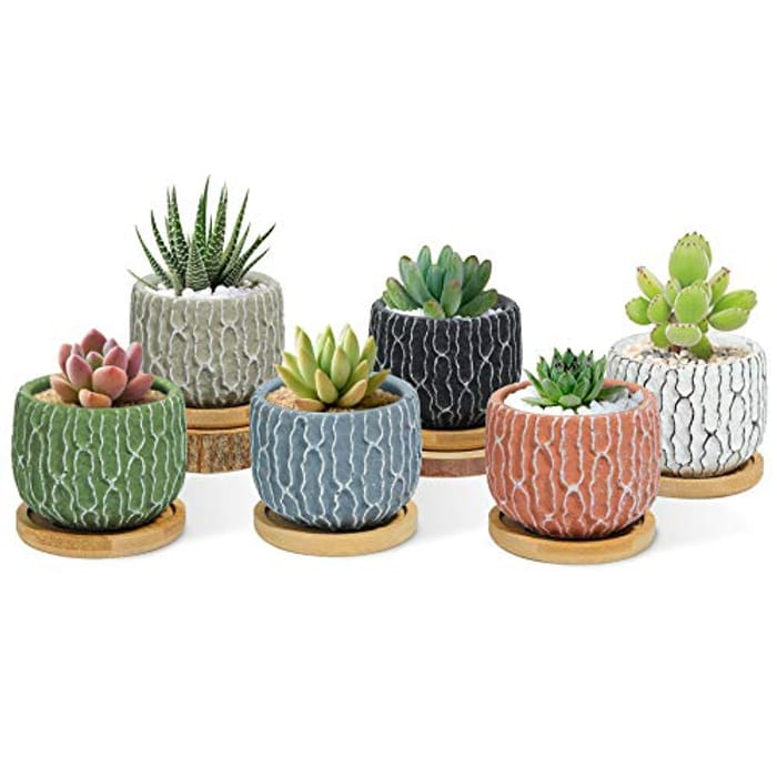 DEAL STACK - Cement Succulent Pot Multi Color Set of 6 with Tray + 20% Coupon