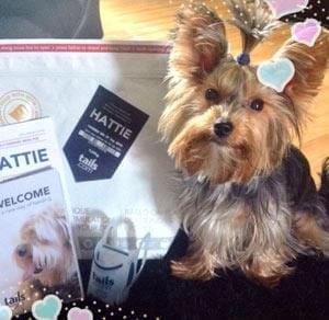 20kg Dog Food Bag For £1 Delivered!