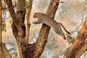 Win a 10 Day Holiday to Zambia