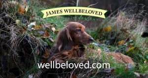 Free James Well-Beloved Puppy Food & Vouchers