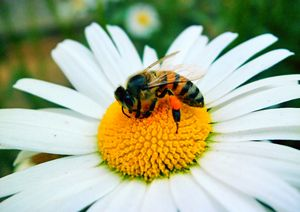 Save Our Bees !!  Free Bee Friendly Seeds