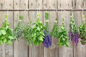 Free Herbs Sample