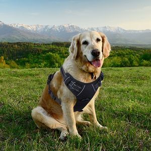 Popular No Pull Dog Harness with Only HALF PRICE £8.49