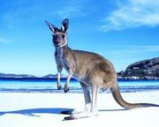 Fly to Australia from just £139 one way