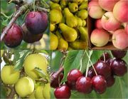 Gardening Express - Grow Your Own Fruit Trees Offer - FIVE Different Trees
