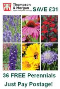 36 FREE PERENNIALS - Just Pay Postage save £31