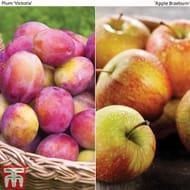Apple Tree and Plum Tree (Bare Root)