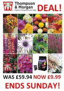 BARGAIN save £50! T&M Customer Favourites Garden Collection. HURRY! ENDS SUNDAY!